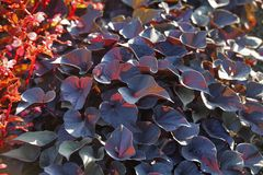 Fleurs de pré en Hyde Park Foyer sélectif images stock