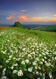 Fleurs de prés Images libres de droits
