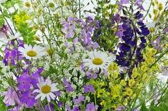 Fleurs de pré Photo stock