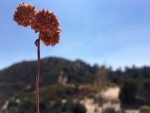 Fleurs de prairie Image libre de droits