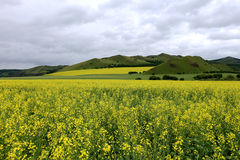 Fleurs 6 de prairie et de chou Photos stock