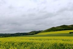 Fleurs 5 de prairie et de chou Images libres de droits