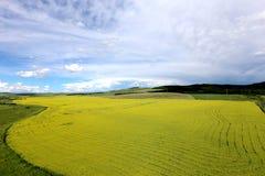 Fleurs 4 de prairie et de chou photo libre de droits