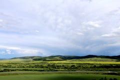 Fleurs 3 de prairie et de chou photo libre de droits