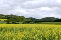 Fleurs de prairie et de chou photo libre de droits