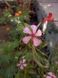 Fleurs de princesse photos stock