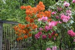 Fleurs de printemps Photographie stock