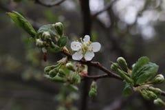 Fleurs de printemps Photo libre de droits