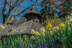 Fleurs de printemps avec la maison de pompe Image libre de droits