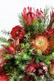 Fleurs de Protea photo stock