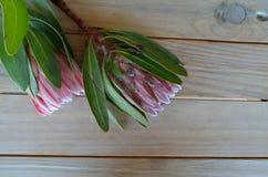 Fleurs de Protea sur une table Photos libres de droits