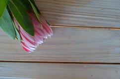Fleurs de Protea sur une table Photos stock
