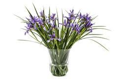 Fleurs de pseudacorus d'iris dans le vase en verre, d'isolement sur le dos de blanc Photo stock
