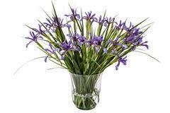 Fleurs de pseudacorus d'iris dans le vase en verre, d'isolement sur le dos de blanc Photos stock