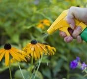 Fleurs de pulvérisation photos stock