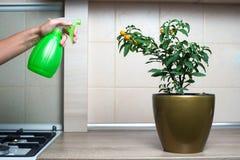 Fleurs de pulvérisation de femme dans la cuisine Images libres de droits