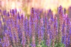 Fleurs de Puprple Photo libre de droits