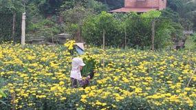 Fleurs de récolte de personnes sur le champ Photographie stock