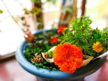 Fleurs de radis image libre de droits