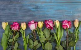 Fleurs de rangée sur un fond bleu photos libres de droits