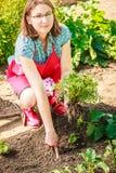 Fleurs de replantation de jardinière de femme de plan rapproché Photo libre de droits