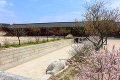 Fleurs de ressort à un palais coréen Photo stock