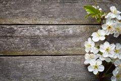 Fleurs de ressort