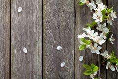 Fleurs de ressort Image libre de droits