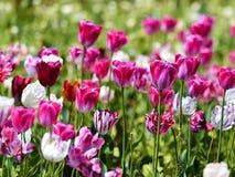 Fleurs de ressort Images libres de droits