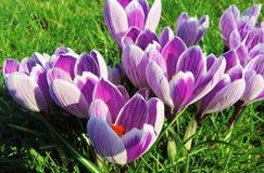 Fleurs de ressort. Photo stock