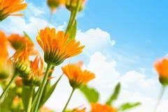 Fleurs de ressort Image stock