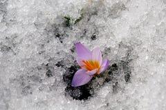 Fleurs de ressort. Photo libre de droits