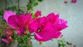 fleurs de ressort photo libre de droits