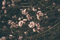 Fleurs 2 de ressort Images stock