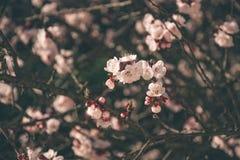 Fleurs 4 de ressort Images libres de droits