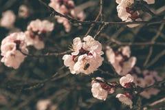 Fleurs 5 de ressort Images libres de droits