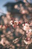 Fleurs 6 de ressort Photographie stock libre de droits