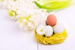 Fleurs de ressort avec des oeufs de pâques à l'arrière-plan de ressort de Pâques de nid avec le concept de Hyacinth White Copy Sp Photos libres de droits