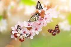 Fleurs de ressort avec le papillon exotique photo stock