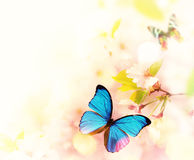 Fleurs de ressort avec le papillon exotique photos libres de droits