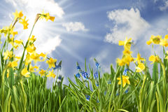 Fleurs de ressort avec Sunny Blue Sky image libre de droits
