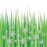 Fleurs de ressort dans l'herbe Images libres de droits