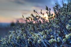 Fleurs de ressort dans le désert Photos libres de droits