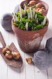 Fleurs de ressort dans le pot contre les jeunes jaunes blancs de source de fleur de concept de fond Photo stock