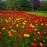 Fleurs de ressort dans les Frances Images stock