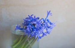 Fleurs de ressort dans un verre d'offre Photo stock