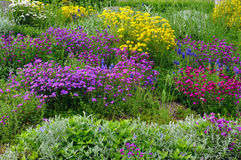 Fleurs de ressort de jardin de roche Photos stock