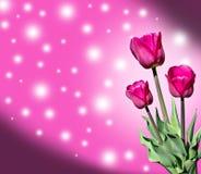 Fleurs de ressort de tulipes Photo libre de droits