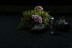 Fleurs de ressort en Autriche Photo libre de droits