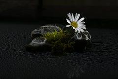 Fleurs de ressort en Autriche Image libre de droits